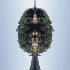 how we grow totem