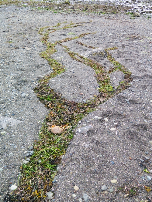 tidal marking 1