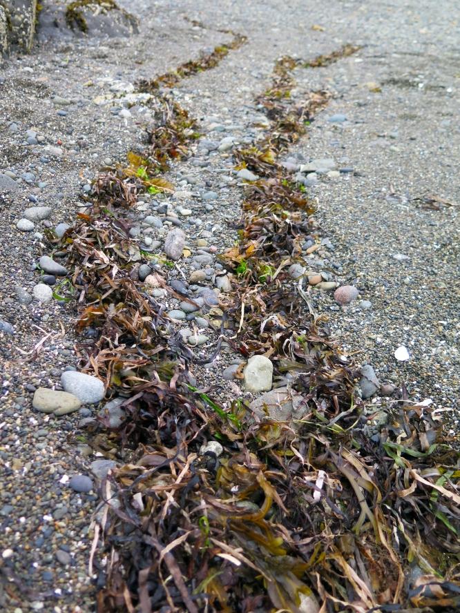tidal marking close