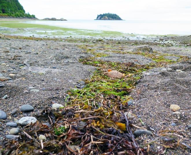 tidal marking wide